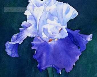 "iris watercolor painting archival print 8"" x 10"""