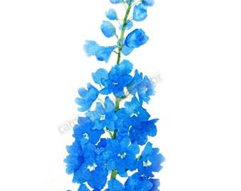 blue delphinium painting archival print