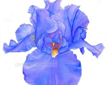 "iris watercolor print of painting 8"" x 10"""