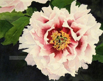 peony watercolor painting archival print