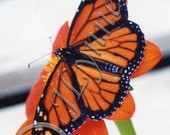Monarch Butterfly on Flower Photo Magnet