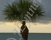 Stormy Beach Palm Photo Magnet