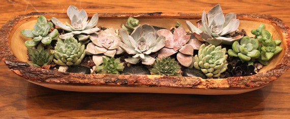 Small Wood Bowl with Living Succulents