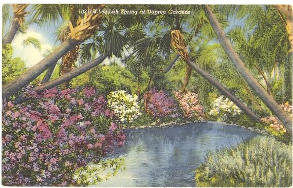 Vintage Florida Postcard - Tampa - Dupree Gardens U-Lee-Lah Spring