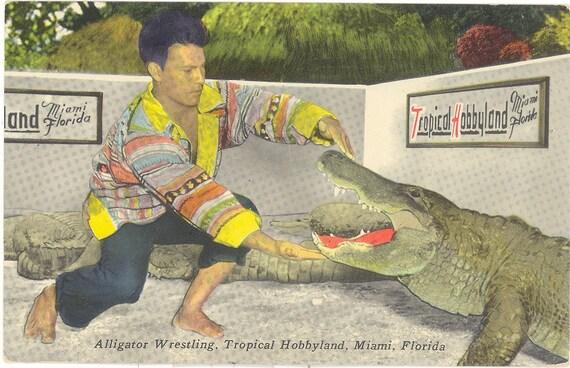 Vintage Florida Postcard -  Miami - Seminole Indian Alligator Wrestling Tropical Hobbyland