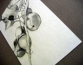 Apple Sketch Print 5x7