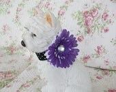 Purple and White Flower Dog or Cat  Neck Collar