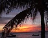 Beach House Decor Palm Tree Ocean Sunset 8x10 Tropical Photograph