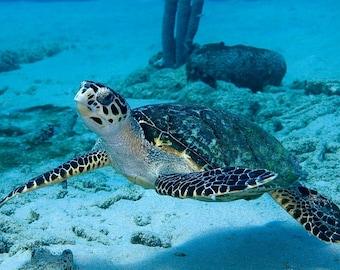 Sea Turtle Art Underwater Photography Print of Sea Turtle Modern Nautical Home Decor