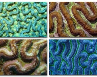 Beach House Decor Coral Labyrinth Set of Four Prints 4x6 Underwater Photography Series for Interior Decorating
