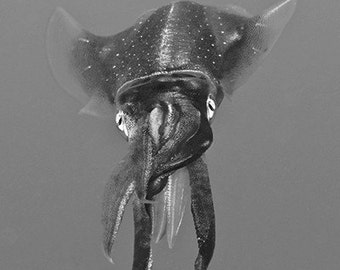 Squid Art Black and White Underwater Photography print of Reef Squid Nautical Decor Masculine Modern