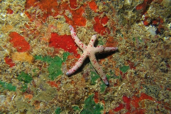 Starfish Decor ~ Starfish Art Nautical Home Decor Underwater Photography Print