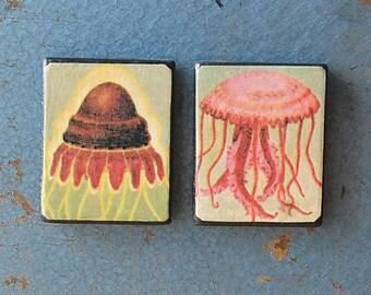 Pair of Handmade Wood Fridge Magnets with Vintage Jellyfish Science Illustrations.