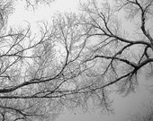 Fractal Branches Photograph Tree Branches Overhead Arching Black and White 12x12 Photograph