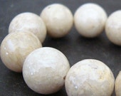 Fossil Beads 4mm Natural White Round Smooth Stones - 8 in Strand