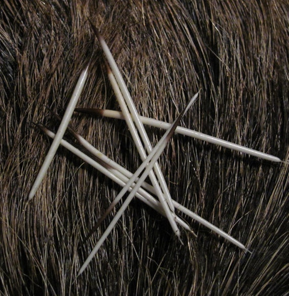 Ten Real Natural Porcupine Quills