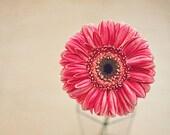 Pink Gerbera Daisy - Flower Photography - Fine Art Photography - Floral Room Decor