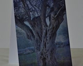 Ancient Olive Tree - Photo Greeting Card - All Occasion Card - Made in Israel