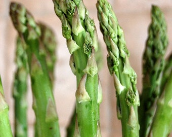 Asparagus - Food Photograph - Kitchen Decor - Fine Art Photograph
