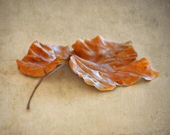 Autumn Leaf Fine Art 5x7 Photograph - Israel Photography - Fall Photography