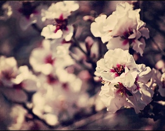 Almond Blossoms - Pink and White 5x7 Fine Art Nature Photograph - Made in Israel
