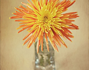 Orange and Yellow Flower Photography - Nature's Firework - Firework Chrysanthemum Photograph - affordable home decor