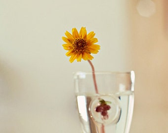 Simplicity - Yellow Flower Photograph, Nature Photography from Israel, Floral Decor, Affordable Home Decor,