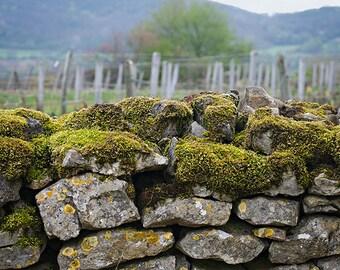 Stone Wall, French Vineyard - Burgundy France Travel Photography 5x7 fine art photo