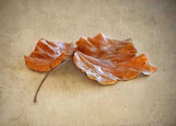Autumn Leaf Fine Art 5x7 Photograph - Israel Photography - Fall Photography
