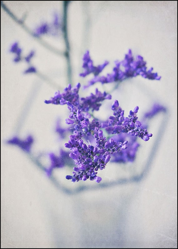 Purple Haze - 5x7 fine art flower photograph - romantic still life - purple flowers - photography from Israel