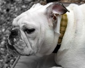 Plaid About You Green and Cream Plaid Fabric - Dog Collar by jenniebgoode