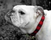 Chocolate Covered Strawberry Stripes - Brown and Red Fabric Dog Collar