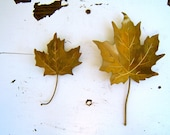 vintage golden maple leaf wall hangings