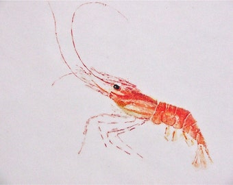 Shrimp Greeting Cards