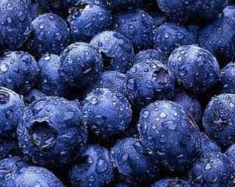 Handmade Organic  Preserves, Farm Grown Organic Blueberry Jam  summer at its best