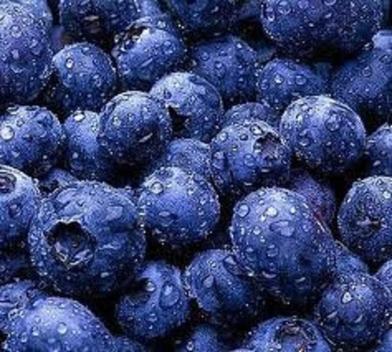 Organic Blueberry Jam  summer at its best