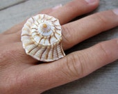 Lightning Whelk Seashell Ring