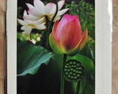Frameable Lotus Photo Hemp Greeting Card