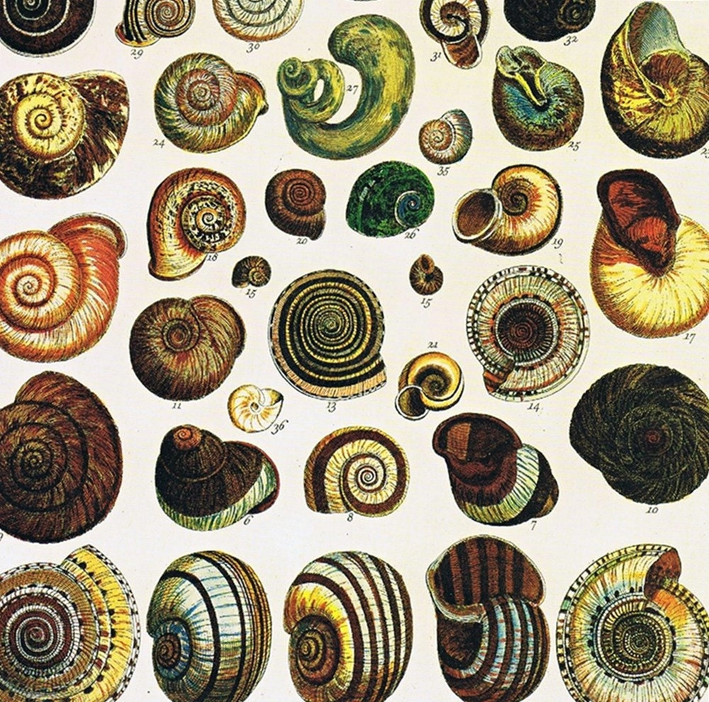 Albertus seba shells and corals betting nba preseason betting trends