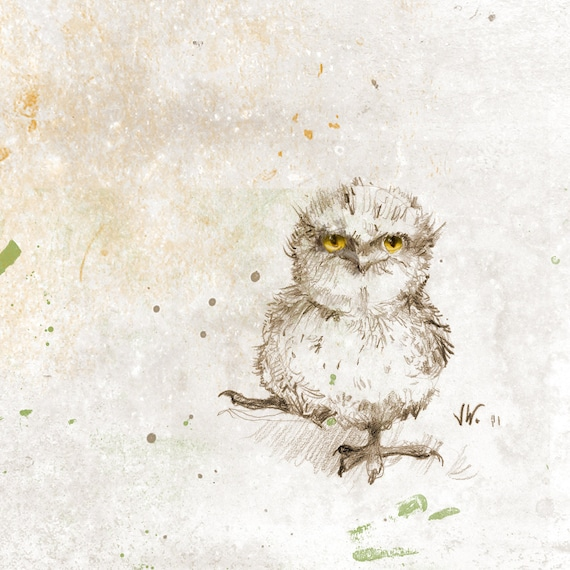 Tawny Frogmouth Chick. Bird. Owl. Fine Art Print from my Original Drawing