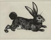 Haigha Bugsy Rabbit