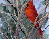 Cardinal in Quince Bush - signed, limited edition print of an original watercolor (fits 11x14 frame)