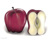 Apple / apples - whole and half - Sensual greeting card based on color pencil drawing 027DR