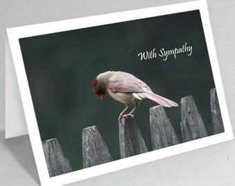 Sympathy card -  With sympathy card - Sad cardinal bird greeting card (Blank inside)