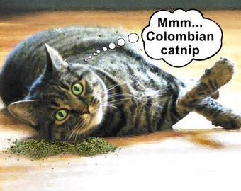 Funny Birthday card - Funny cat birthday greeting card - Cute cards funny cards - Colombian catnip - Cat rolling in catnip