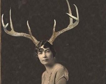 Deer Liza - 8 X 10 Fine Art Print