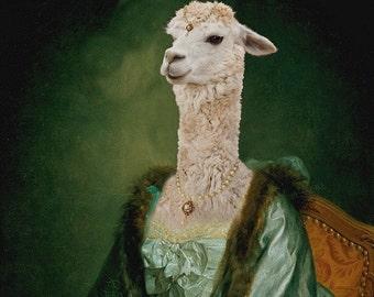 Imperatrice Vicugna - 18 x 24 Fine Art Print