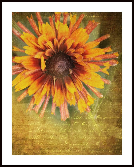 Flower art, floral photo print, nature photography, botanical garden, sunflower art