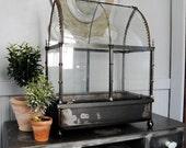 Glass terrarium wardian case