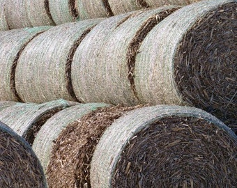 Hay Bales-8x10 Photo